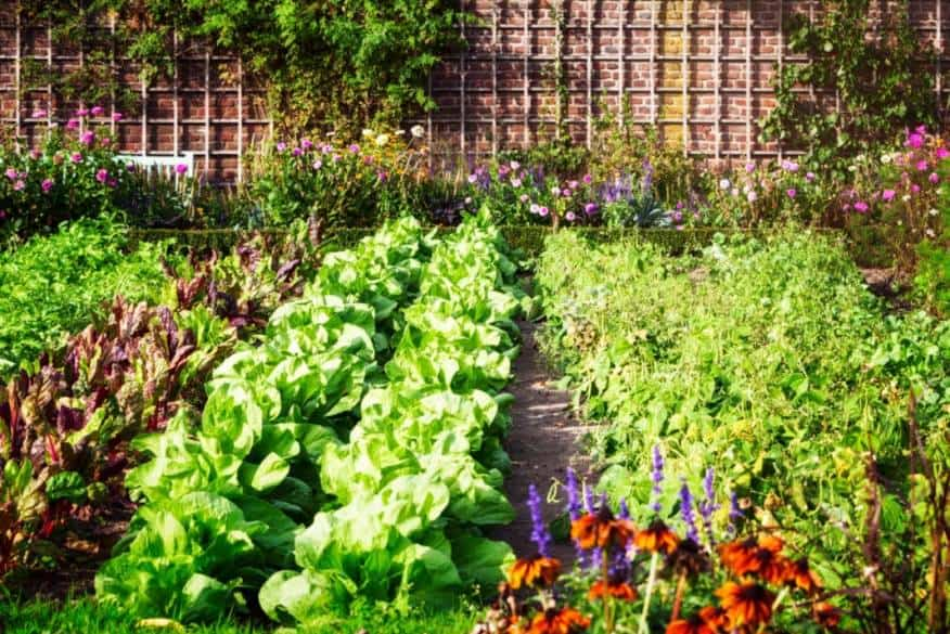 The Basic Guide to Starting your Own Vegetable Garden